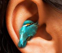 vogel oor