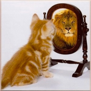 kat leeuw spiegeling